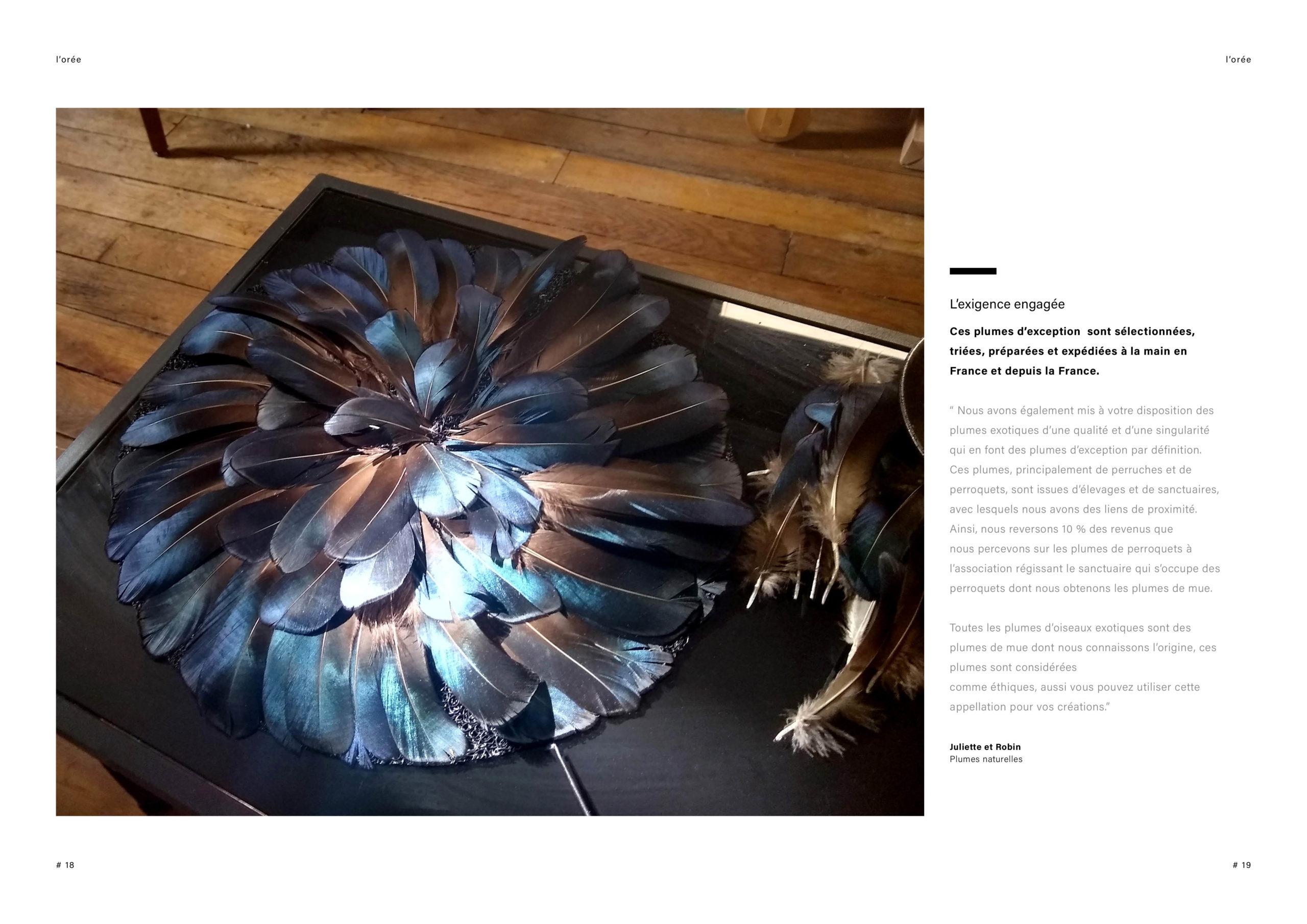 Catalogue creation_WEB10