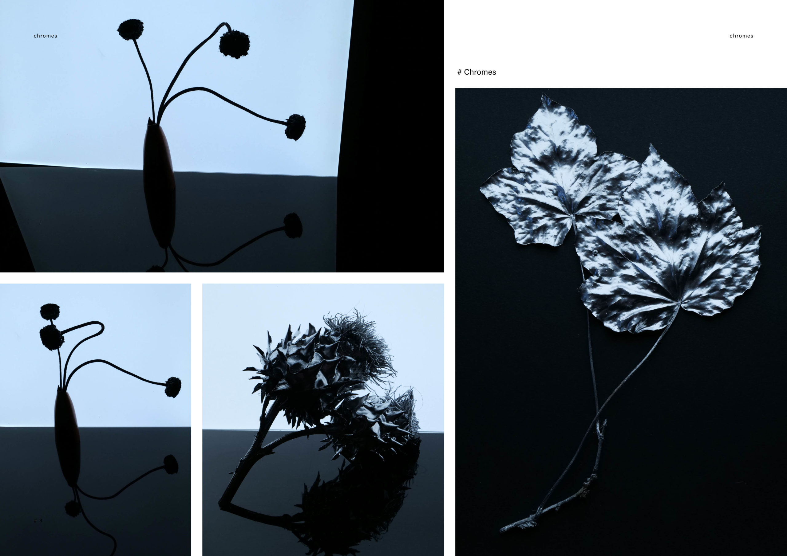 Catalogue creation_WEB5